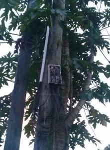Mauritius Telecom Column